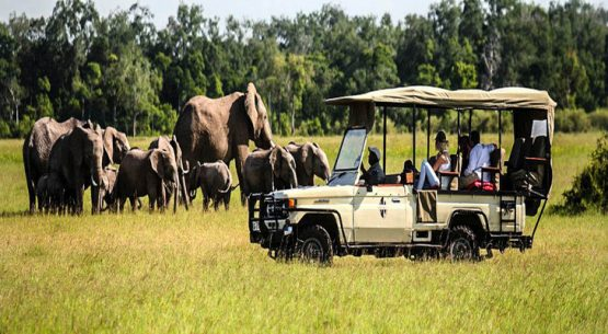 Car rental considerations for private tour vs private tour in Rwanda